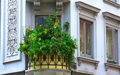Pflanzen als Sichtschutz für Terrasse und Balkon