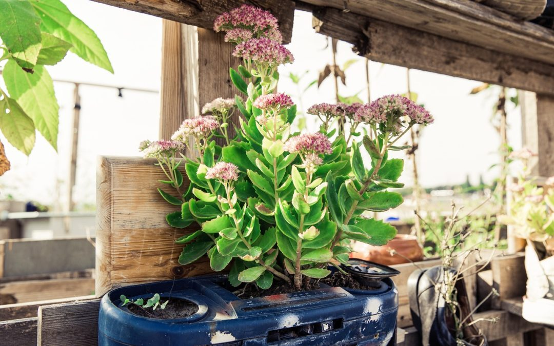 Gardening: Eine Einführung für den Gemüseanbau auf dem Balkon